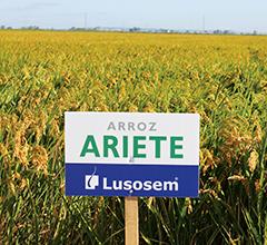 Arroz Ariete Lusosem